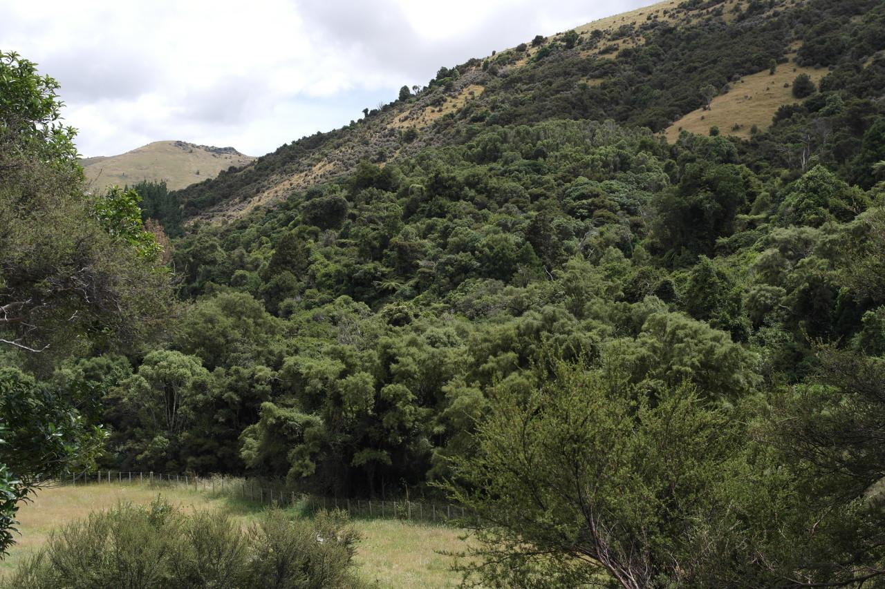 002 BanksPen Kahuna Valley Forrest