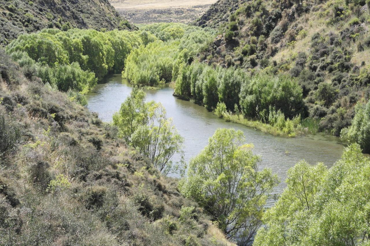 006 To Moeraki Deep Stream Trees River