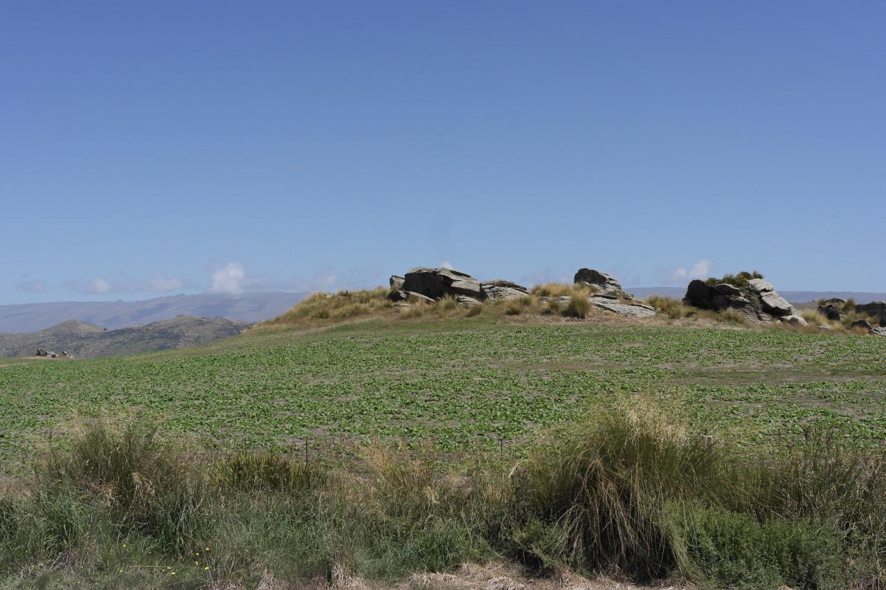 Die Straße führt ein Plateau hoch und dort oben gibt es dann Massen dieser Steine