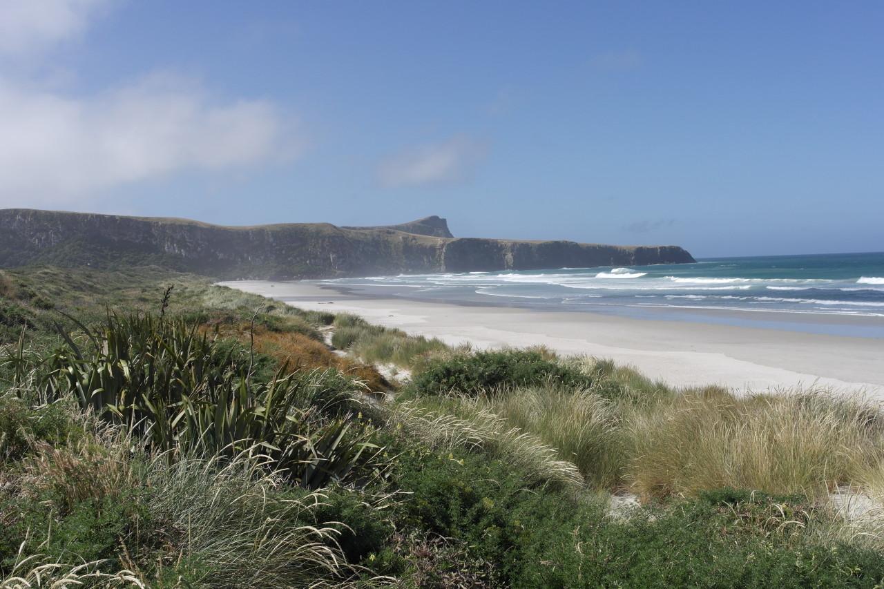 Blick auf den Strand vom Wanderweg. Bis 1990 war hier alles Kuhweide, erst dann wurde wieder die ursprünglichen Büsche und Gräser angepflanzt. Sieht gut aus!