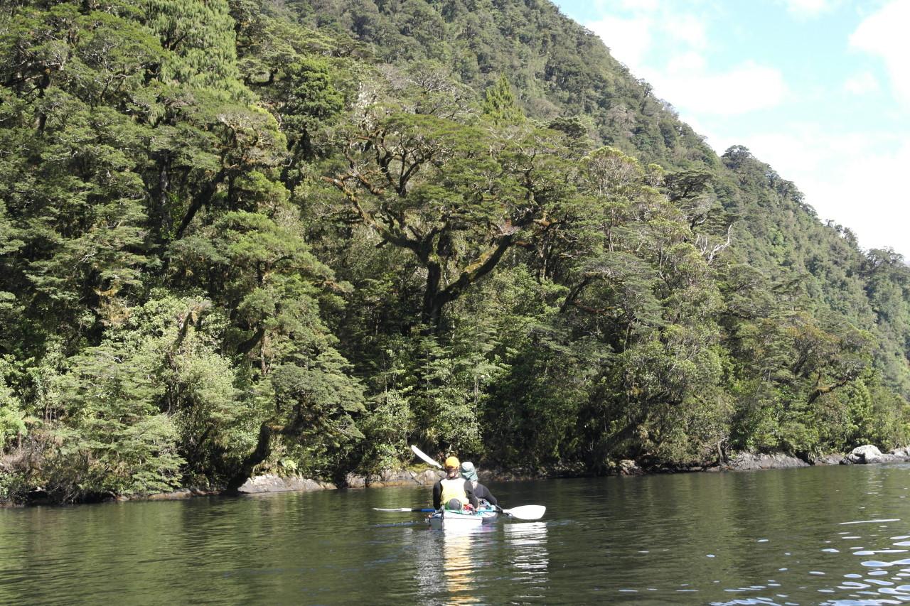 Am schönsten waren die dichten Vorbeifahrten am Ufer, an Wasserfällen vorbei oder unter Ästen hindurch!