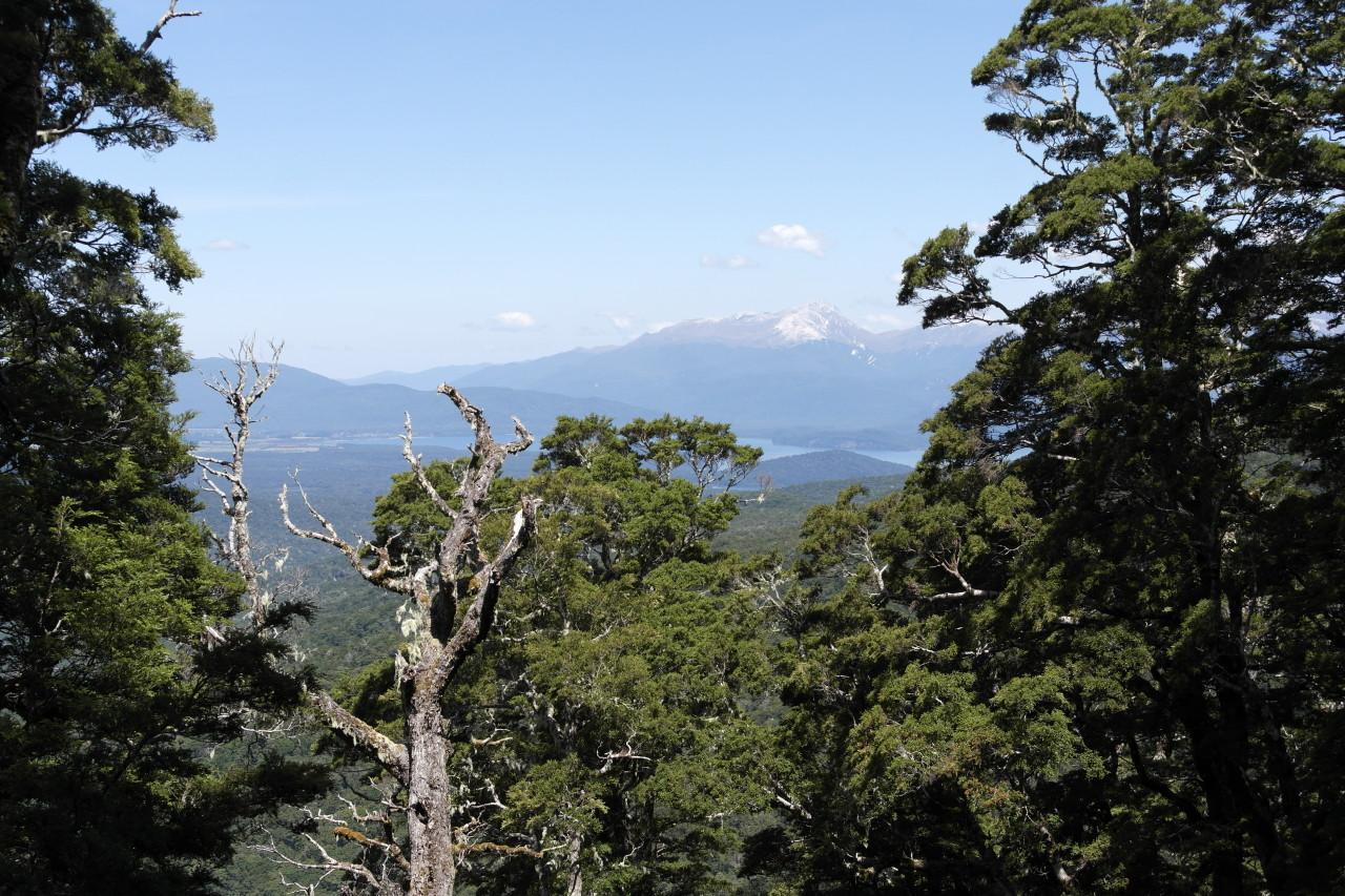 Noch im Wald war das so ziemlich der einzige Aussichtspunkt. Der hohe Berg im Hintergrund ist der Titiroa und auf ihm liegt nicht etwa Schnee, sondern er besteht komplett aus hellem Granit!