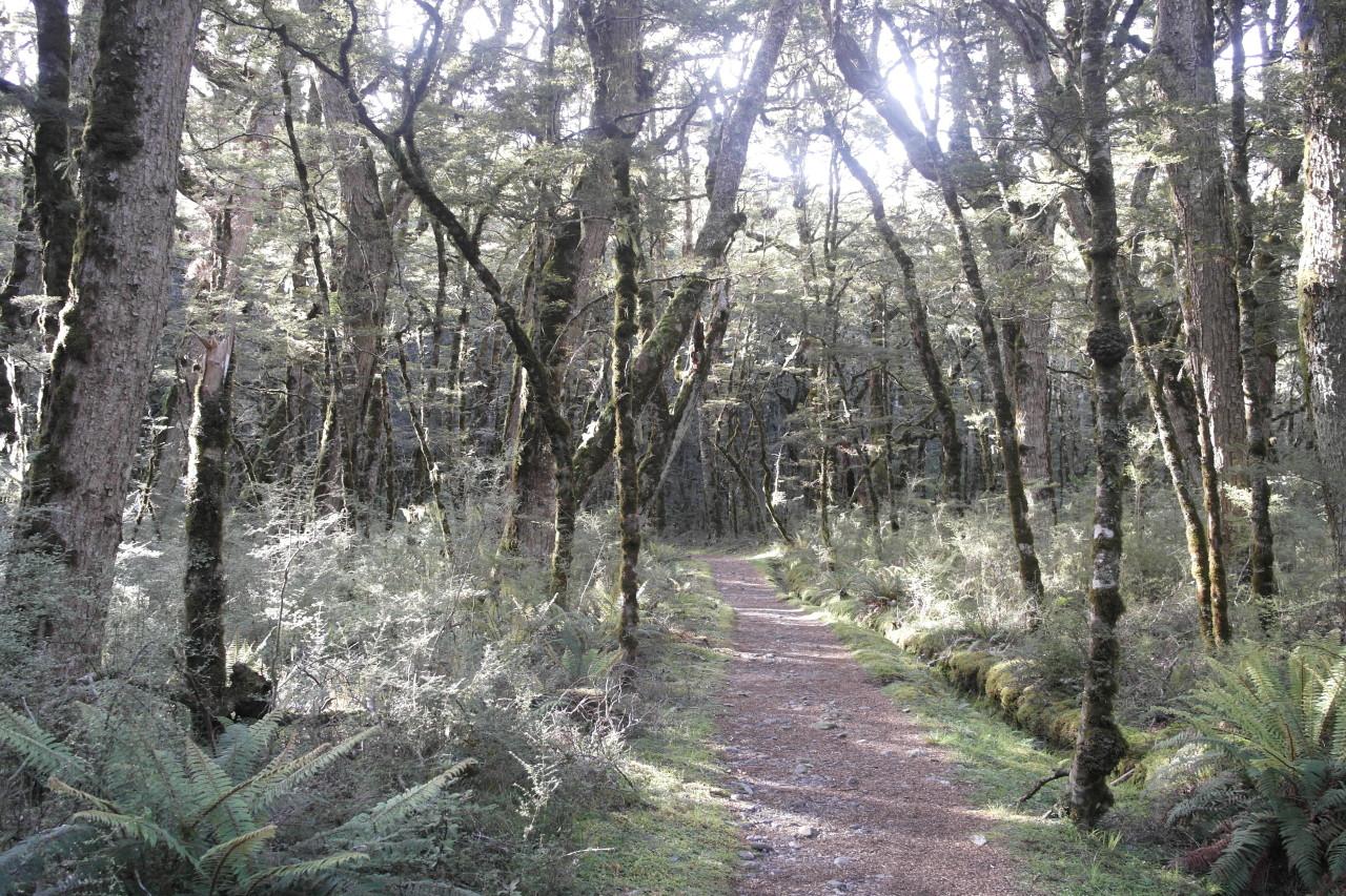 Mit Moos verhangene Bäume in der Morgensonne.
