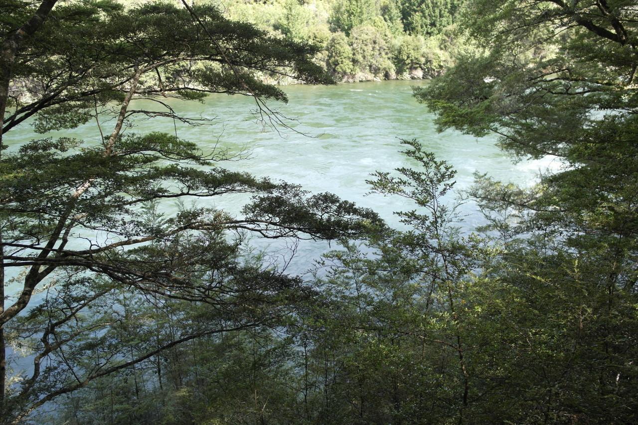 012 Kepler Track Day 3 Waiau River Trees