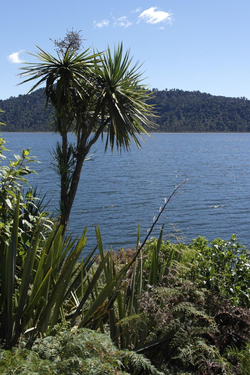 Lake Ianthe mit einer Art Stechpalme oder so.