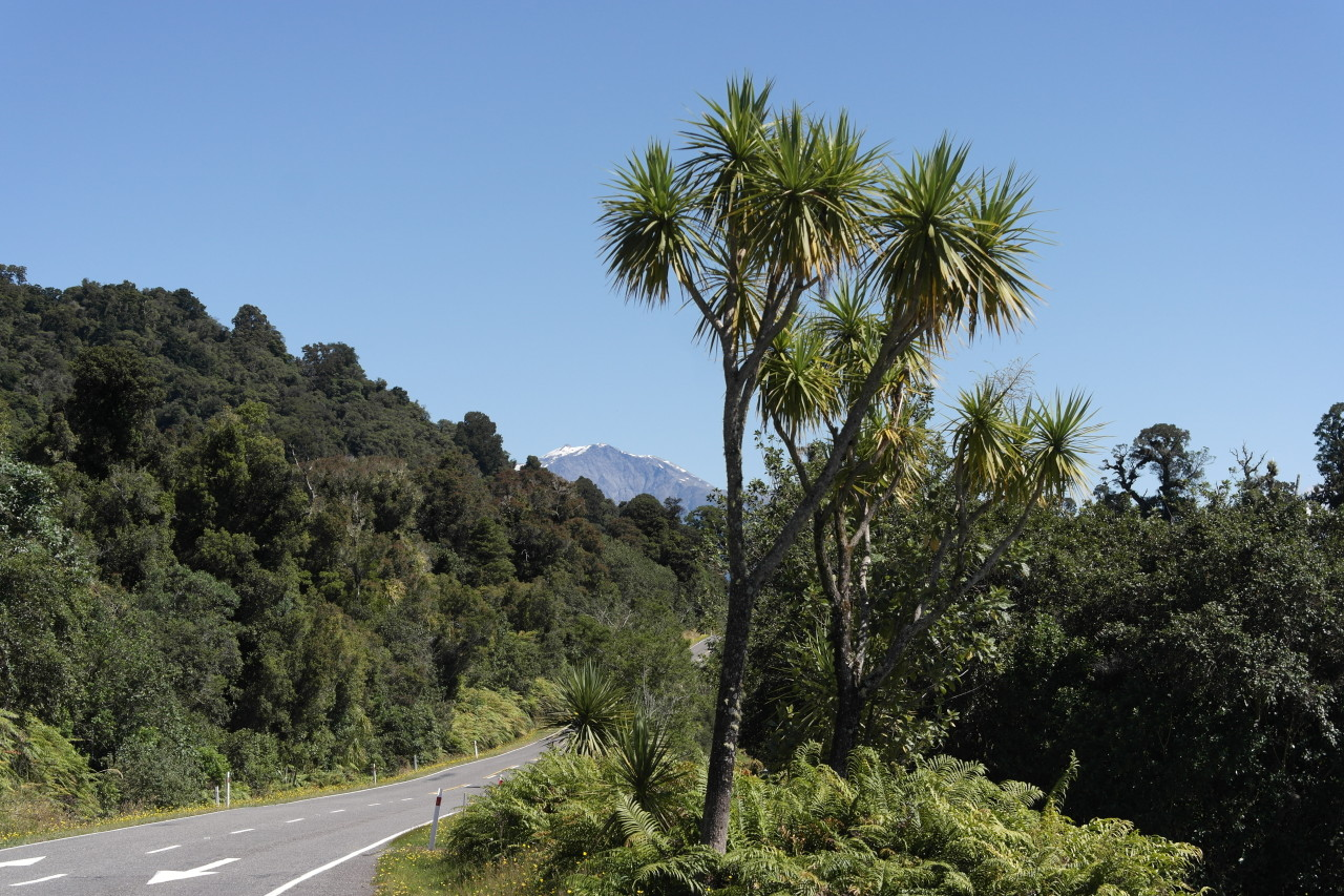 018 To Punakaiki Lake Ianthe Palms Mountains