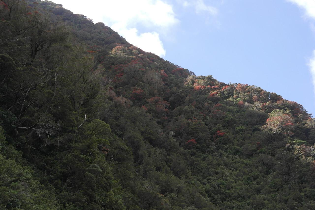 In Neuseeland gibt es nur fünf Baumarten, die im Winter ihre Blätter verlieren. Im Winter bleibt der Schnee also auf den Blättern liegen. Das muss ziemlich schön aussehen :)