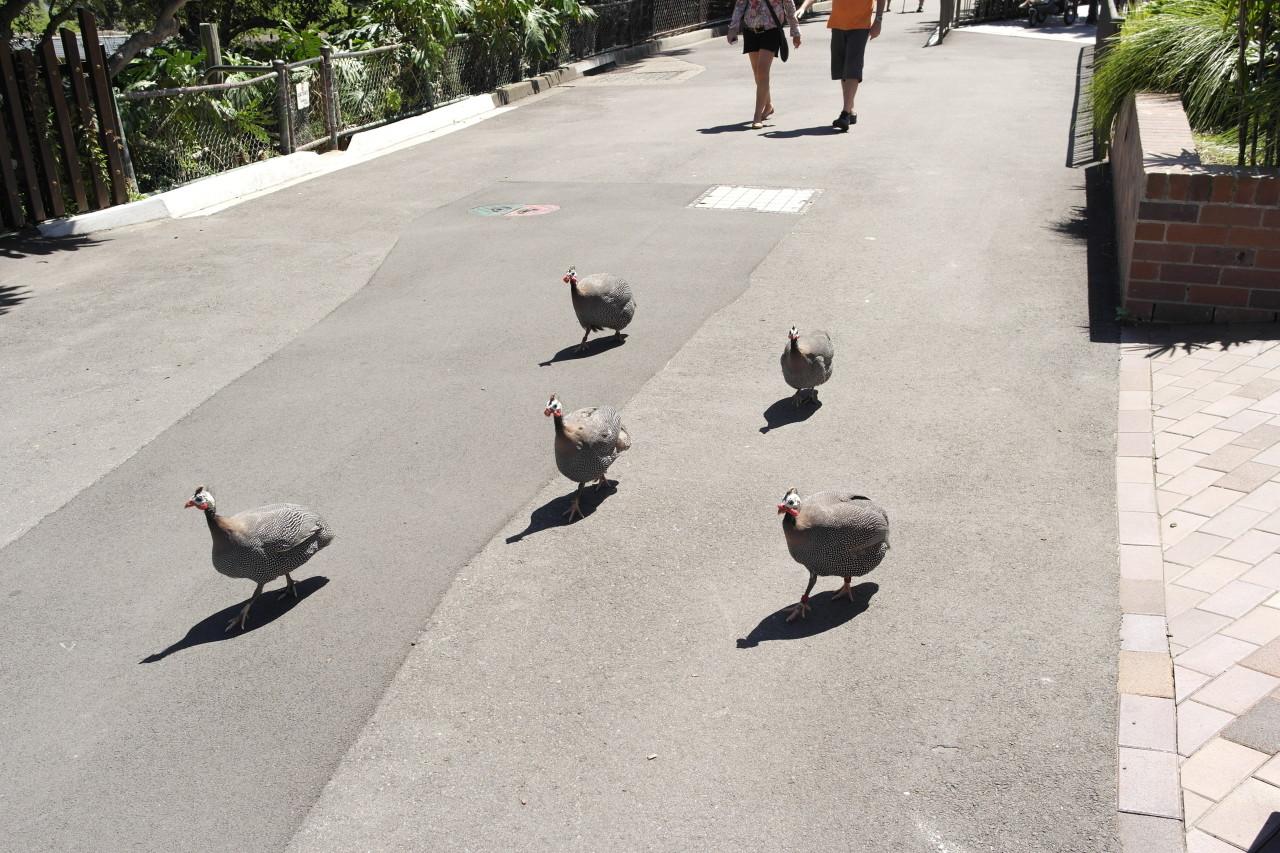 Irgendwelche ausgebüxten Hühner